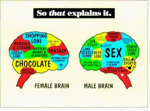 male brain and female brain structure